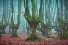 Gigantes-del-Bosque