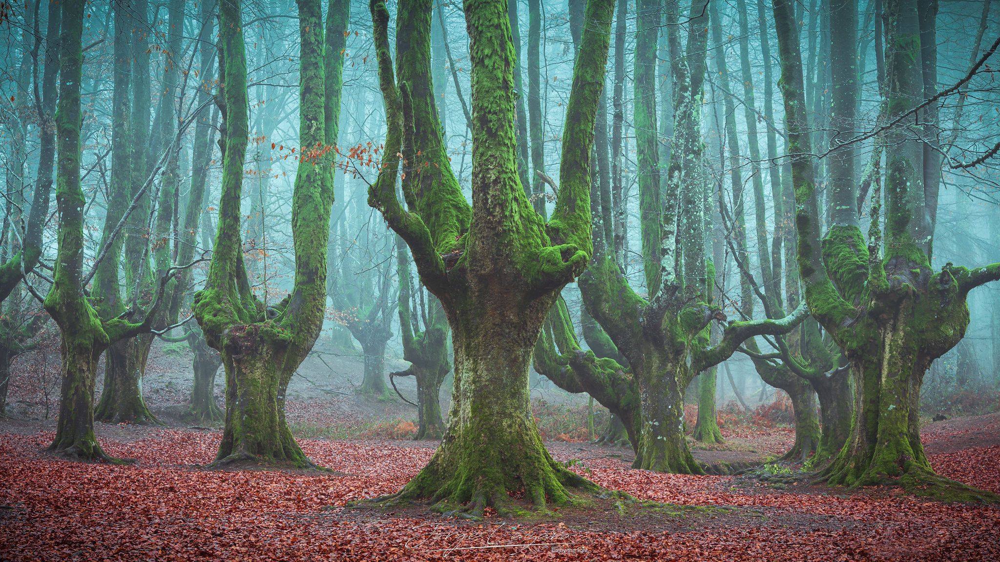 Gigantes del Bosque - Jorge Lázaro