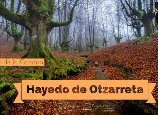 Hayedo de Otzarreta - Jorge Lázaro