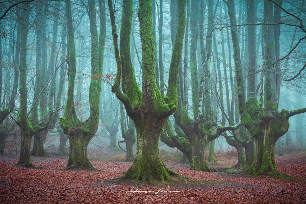 Gigantes en el bosque - Jorge Lázaro