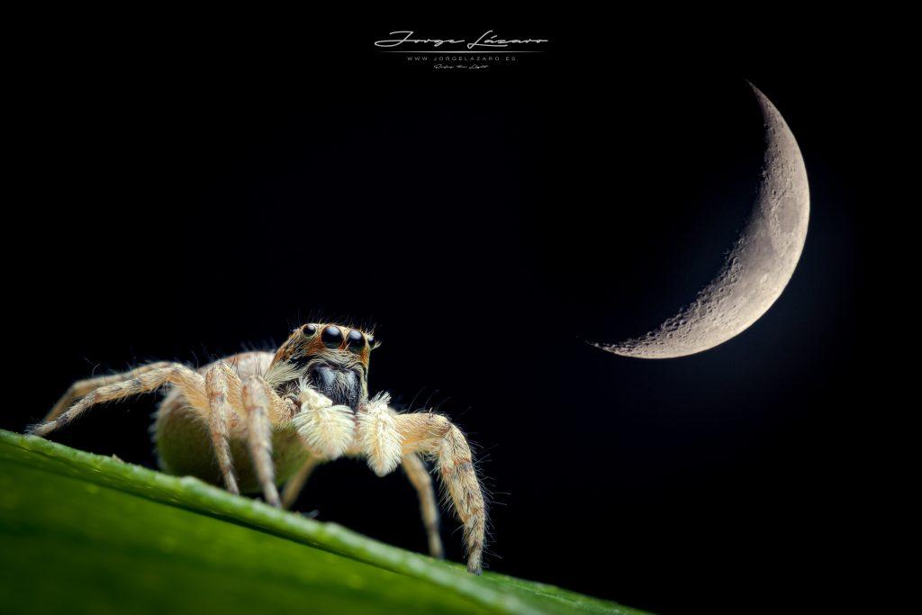 Bajo la luz de la Luna - Jorge Lázaro